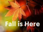 Fall is Here