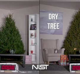 Save Energy and Your Home this Christmas – Water Your Christmas Tree